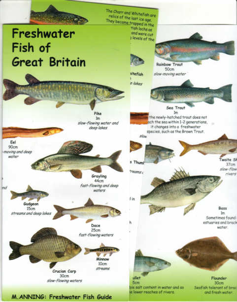 Fish identification guides reef fish identificationguidesslates er fishes of great britain pocketable laminated chart an illustrated fold out guide to the freshwater fold out sciox Images