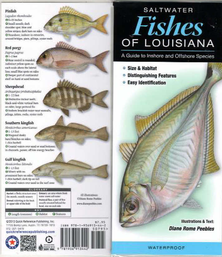 Book on north american fishesshes of north america saltwater fishes of louisiana sciox Gallery