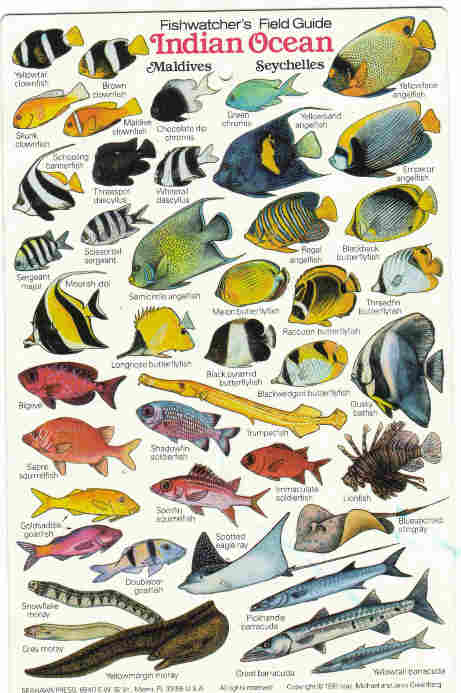 Indian ocean fishfishes maldives zanzibar fish diving books reef fish of the indian ocean sciox Gallery