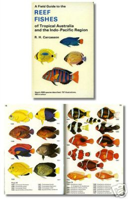Indian ocean fishfishes maldives zanzibar fish diving books a field guide to the reef fishes of tropical australia and the indo pacific region sciox Gallery
