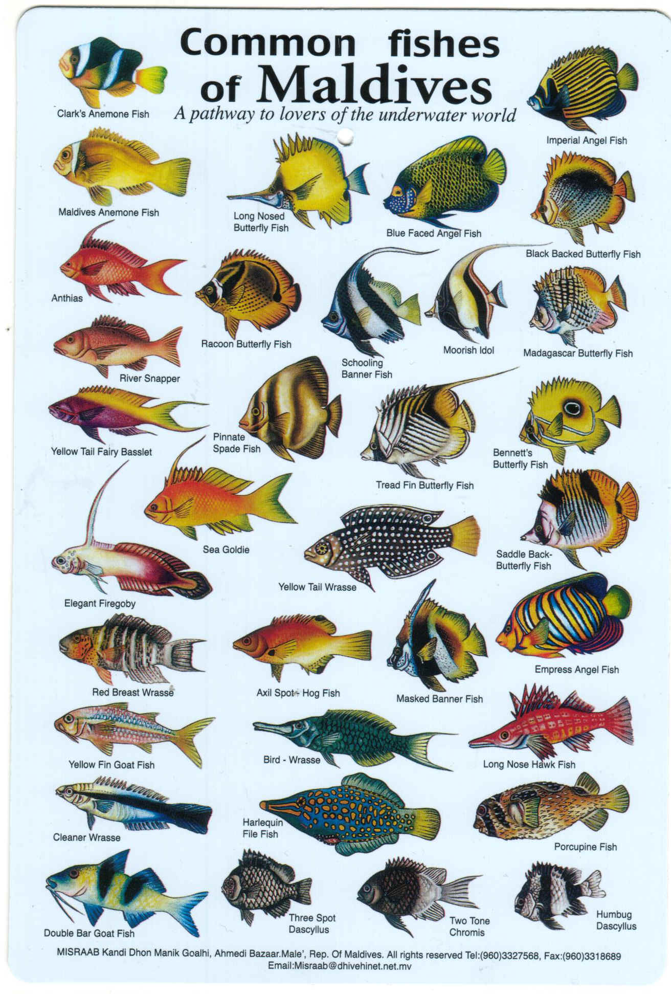 Freshwater fish malaysia - Fishes Of The Maldives Identification Chart Water Resistant Laminated Card